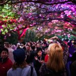 Photo Credit_Evan Chen Photography_Sakura Ilumination 3