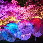 Photo Credit_Evan Chen Photography_Sakura Ilumination 4
