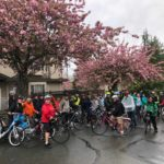 Photo Credit_Linda Poole_Bike the Blossoms_2018_1