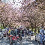 Photo Credit_Melissa Bruntlett_Bike The Blossoms 6