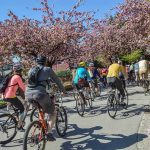 Photo Credit_Melissa Bruntlett_Bike The Blossoms 67