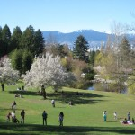 Umineko cherry trees at Queen Elizabeth park